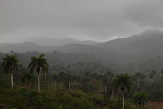 Sierra Cristal National Park National park and mountain in Cuba