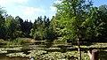 Silbersee Pond Dresden Heide DSC05345.jpg