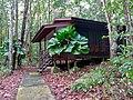 Single Storey Cabin with Parasol Palms (Licuala orbicularis) (15679693295).jpg