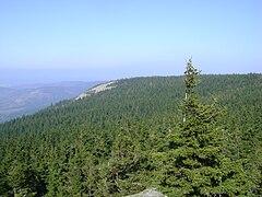 Szczyt Skalnika i zbocze z rumoszem skalnym. Widok z punktu widokowego na Ostrej Małej