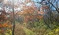 Skiles Test Nature Park.jpg