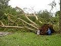 South Florida Katrina Disaster Zone.jpg