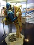 Space suits in Memorial Museum of Cosmonautics, Moscow, Russia, 2016 26.jpg