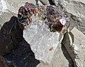 Sphalerite on Devonian limestone (Auglaize Quarry, near Junction, Ohio, USA) (48882672427).jpg