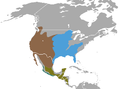 Spotted Skunk areas.png