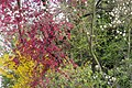 Spring Colours.jpg