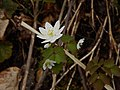 Spring can be seen in many different way around Hungry Mother State Park. - AA (26158062795).jpg