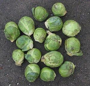 Brassica oleracea var. gemmifera English: Brus...