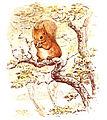 Squirrel Nutkin.jpg