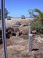 Starr-030903-0003-Nicotiana glauca-barricade construction-Kanaha Beach-Maui (24271987879).jpg