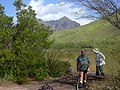 Starr-040213-0002-Conocarpus erectus-habit with Mike and Forest-Ukumehame-Maui (24330846919).jpg