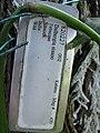 Starr-091104-0816-Dalbergia sissoo-plant tag-Kahanu Gardens NTBG Kaeleku Hana-Maui (24692143650).jpg