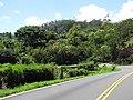 Starr-110330-4259-Ochroma pyramidale-habitat view garden from Hana Hwy-Garden of Eden Keanae-Maui (24963325522).jpg