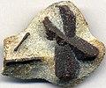Staurolite schist (Keivy Schist; Mt. Ploskaya, Kola Peninsula, Russia) (16300555144).jpg