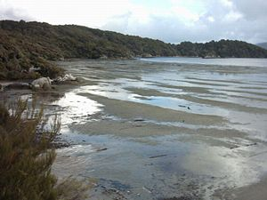 Mudflat - Mudflats near Oban on Stewart Island, New Zealand