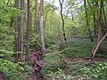 Stream in the woods, with bluebells - geograph.org.uk - 166574.jpg