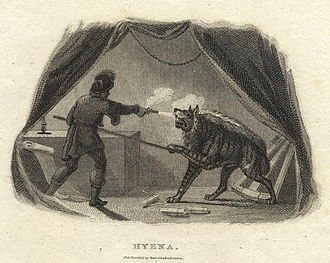 Engraving of a striped hyena attacking a man in The Naturalist's Cabinet (1806) Striped hyena shot.jpg