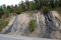 Structurally tilted sedimentary rocks (Price Formation, Lower Mississippian; Cloyds Mountain roadcut, Valley Coalfield, Virginia, USA) 4 (30461823815).jpg