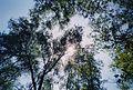 Sunlight111.jpg