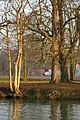 Sunlit trees - geograph.org.uk - 1111473.jpg