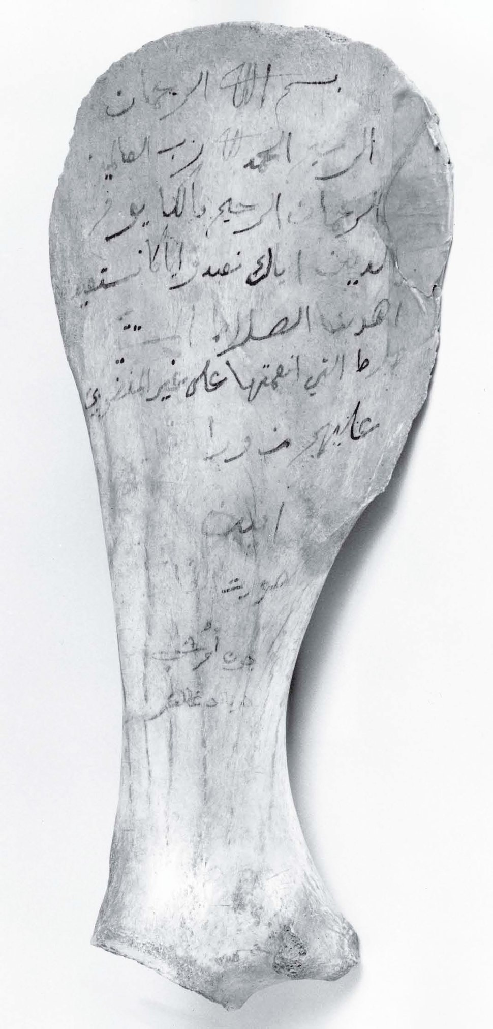 Surat al-Fatiha inscribed upon the shoulder blade of a camel