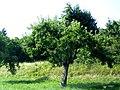 Tübingen - Neuer Botanischer Garten 14.jpg