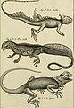 Tableau encyclopédique et méthodique des trois règnes de la nature - dédié et présenté a M. Necker, ministre d'État, and directeur général des Finances (1789) (14759434486).jpg