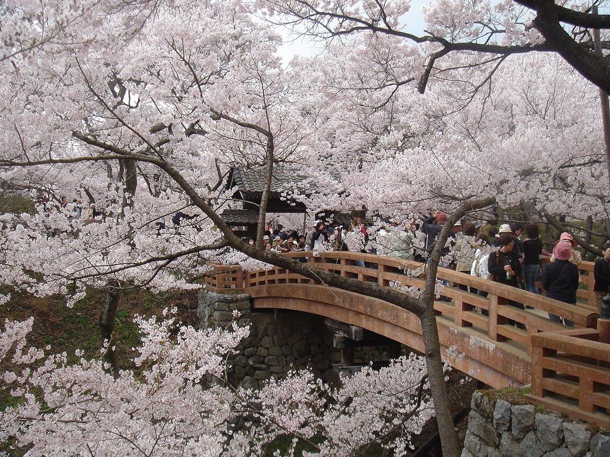 桜の季節の城門