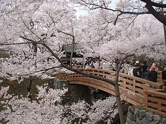 Siege of Takatō (1545) - Castle gate hidden behind sakura.