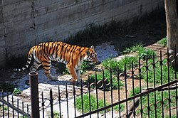 Image illustrative de l'article Zoo de Tbilissi
