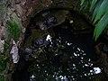Teplice, skleník Tropicana, tropický skleník, želvy (01).jpg