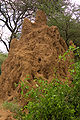 Termite mound-Tanzania.jpg