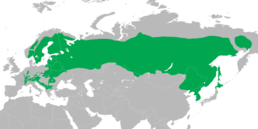 Tetrastes bonasia distribution revise map.png