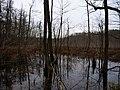 Teufelsbruch swamp next to crossing path in autumn 6.jpg