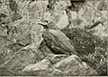 The birds of Yorkshire - being a historical account of the avi-fauna of the County (1907) (14568806329).jpg