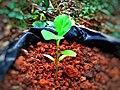The seedling.jpg