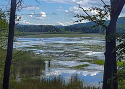 Thompson Pond view from northeast.jpg