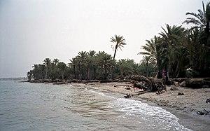 Arabian Peninsula coastal fog desert - Tihama on the Red Sea near Khaukha in Yemen is part of this ecosystem