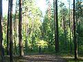 Tomsky District, Tomsk Oblast, Russia - panoramio (139).jpg