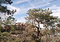 Torrey Pines State Reserve bluff.jpg