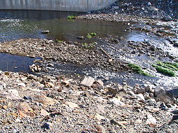 Trabuco creek.JPG