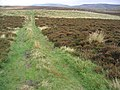 Track in the Cheviot Hills - geograph.org.uk - 265094.jpg