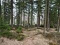 Trail from Sonnenberg to Rehberger Planweg 06.jpg