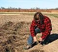 Transplanting wheatgrass2.JPG