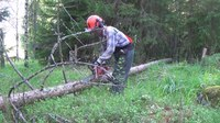 File:Tree Felling III- Limbing the Trunk.webm