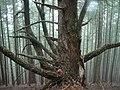 Trees in Grants Pass, Oregon (14183606332).jpg