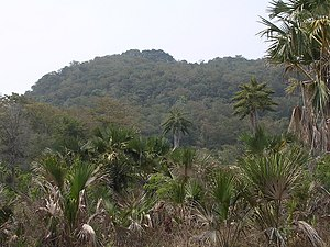 Tropical dry forest and Corypha palm savanna along the Lospalos- Uatu kerbau road, Lautem, Timor-Leste.jpg