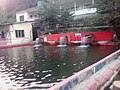 Trout fish farm, mingora.jpg