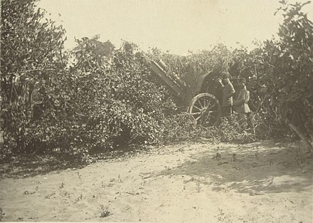 Ottoman gun among the hedges near Gaza Turkish Gun nrGaza00034v.jpg