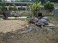 Turtles in Zoo Negara Malaysia (8).jpg